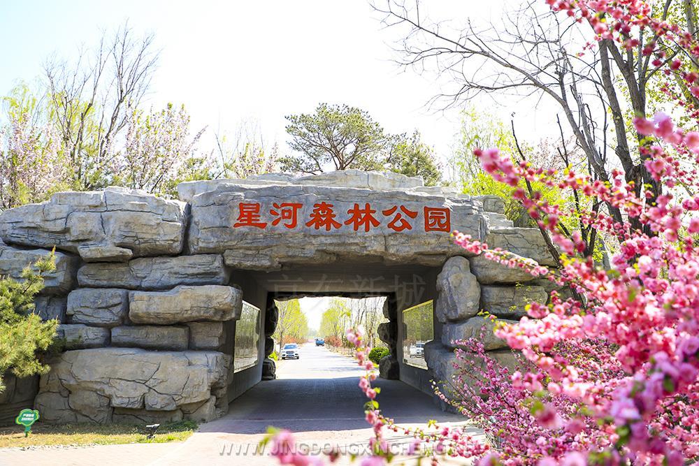 星河森林公园.jpg